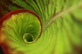 Spiral green leaf in the rainforest with dew drops