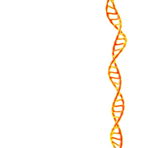 DNA spiral. Isolated on white background. 3D rendering illustration. stock photo