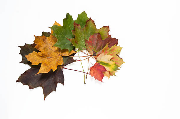 Spiral of dried, colorful autumn leaves stock photo