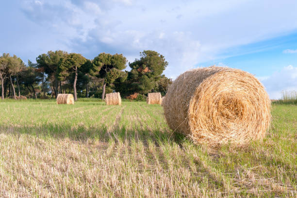 Best Hay Baler Stock Photos, Pictures & Royalty-Free Images