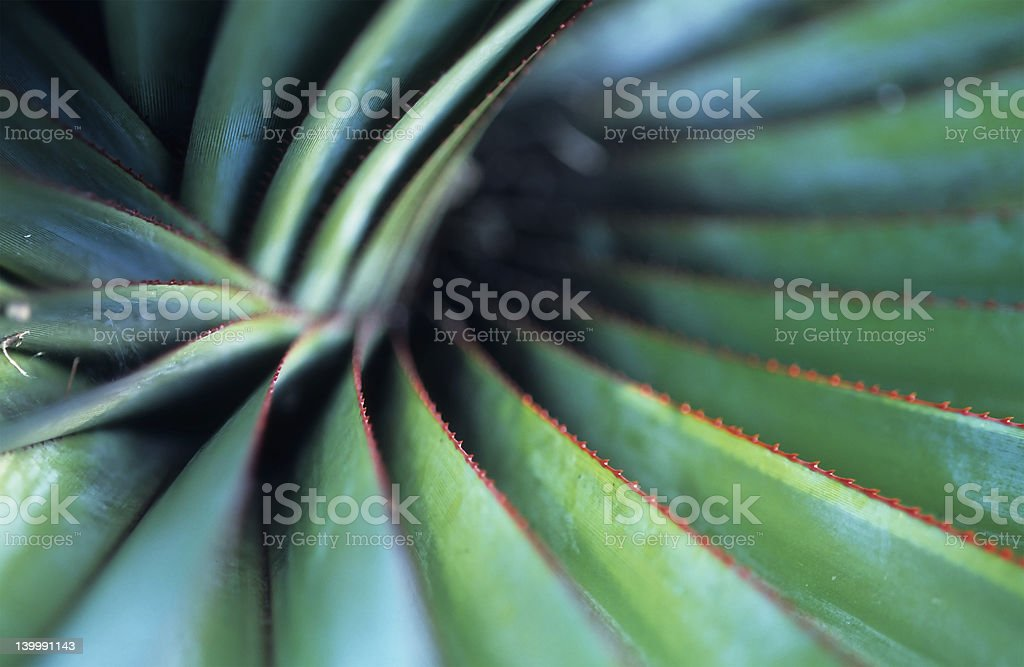 Spiral Palm stock photo