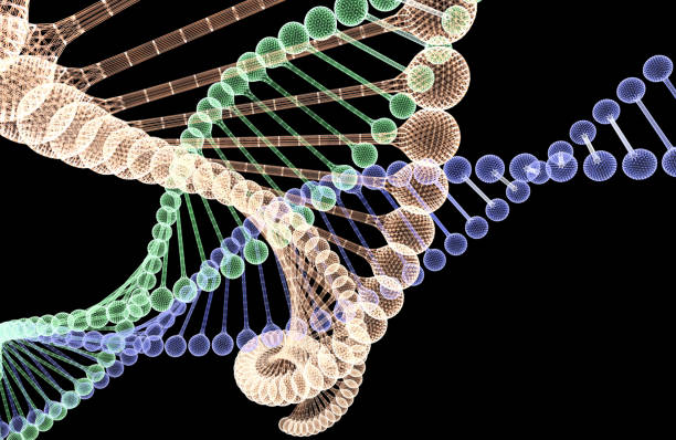DNA Spiral Human DNA Researches gene therapy stock pictures, royalty-free photos & images