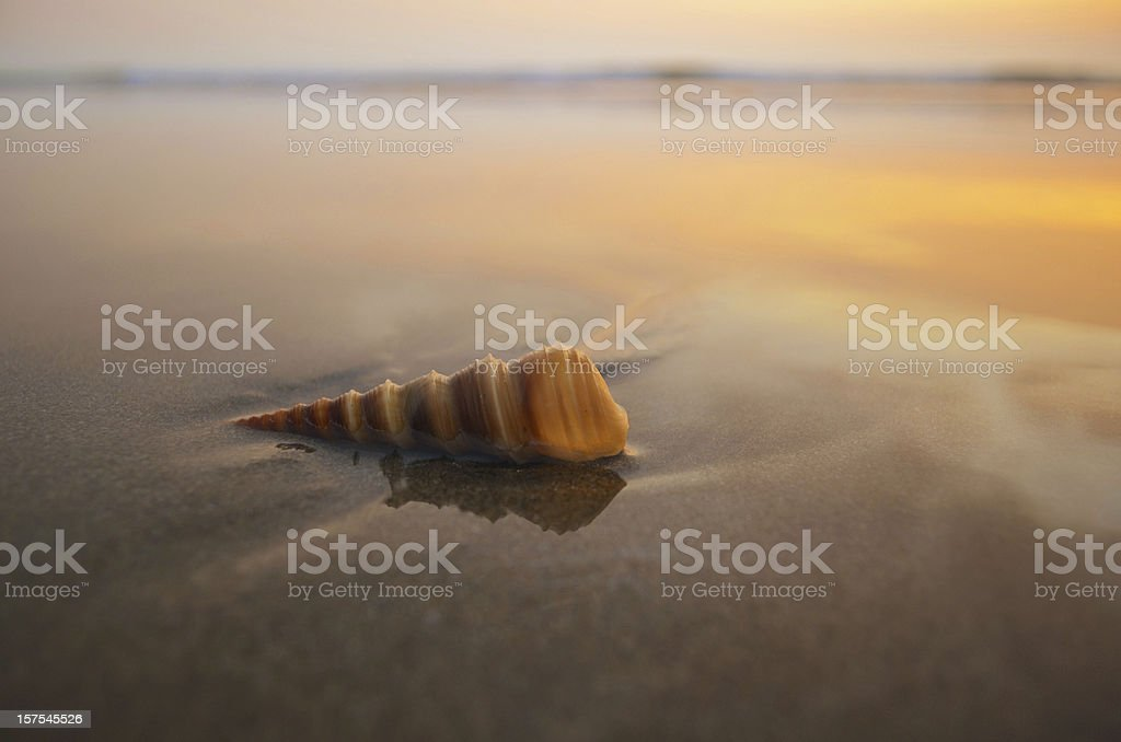 spiral shell on a beach royalty-free stock photo
