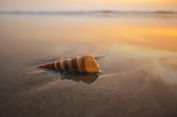 spiral shell on a beach - pink and orange seashell background stockfoto's en -beelden