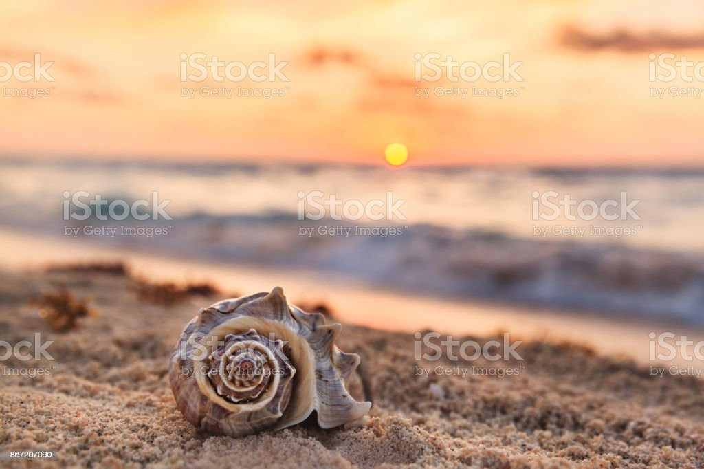 Spiral Shell on a Tropical Sandy Beach with Sunrise over Ocean as a background in Mexico stock photo