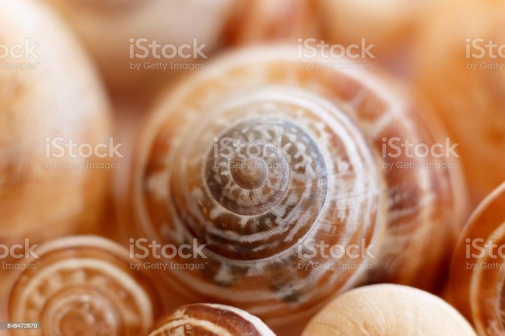 Spiral snail shells. Gastropod shells. Macro, closeup. stock photo