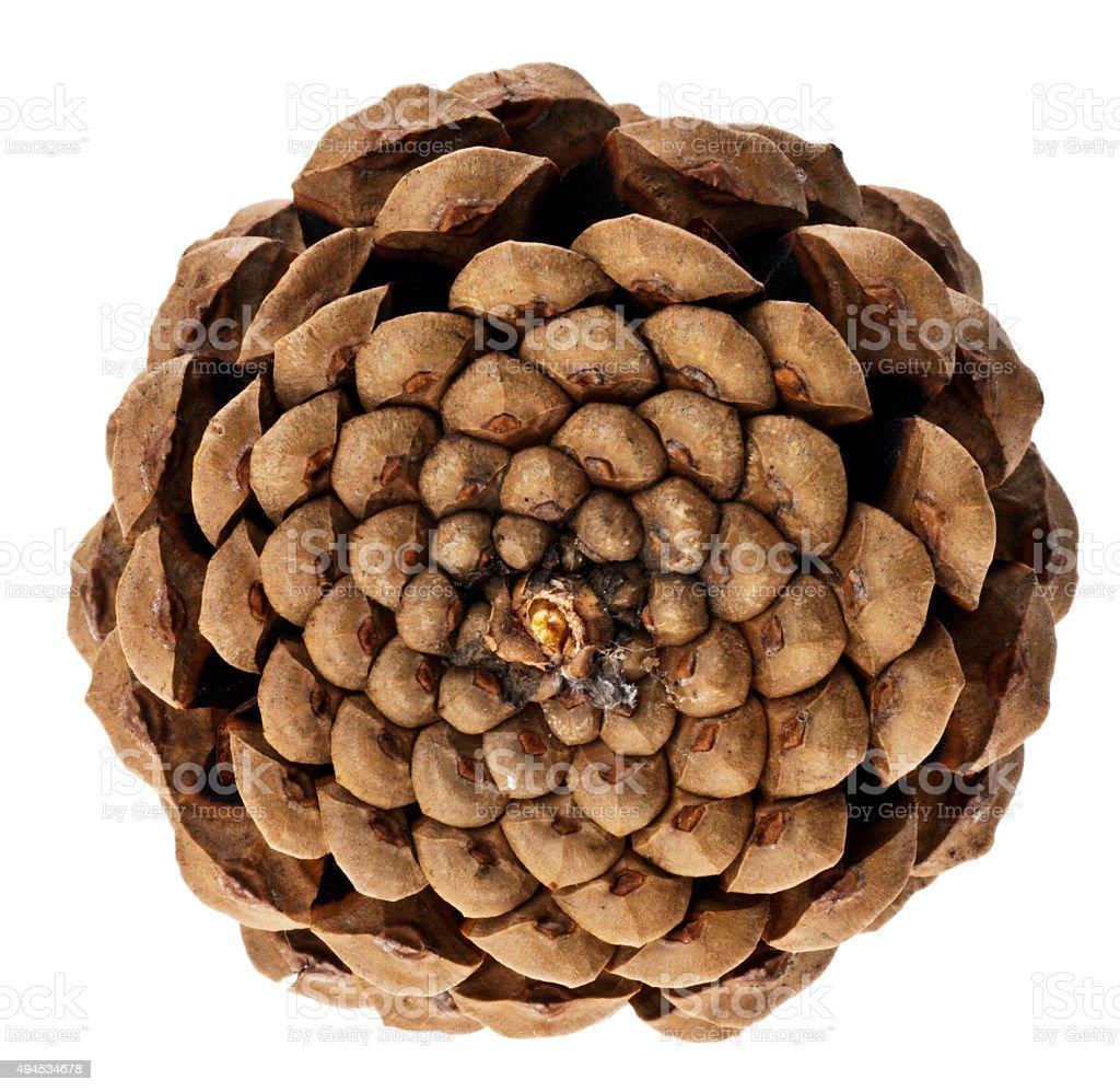 Spiralenaufbau eines Zapfen (Fibonacci-Spiralen) stock photo