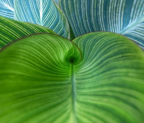 natureza espiralar - náutilo - fotografias e filmes do acervo