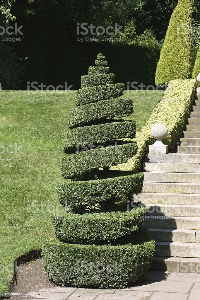 spiralled topiary royalty-free stock photo