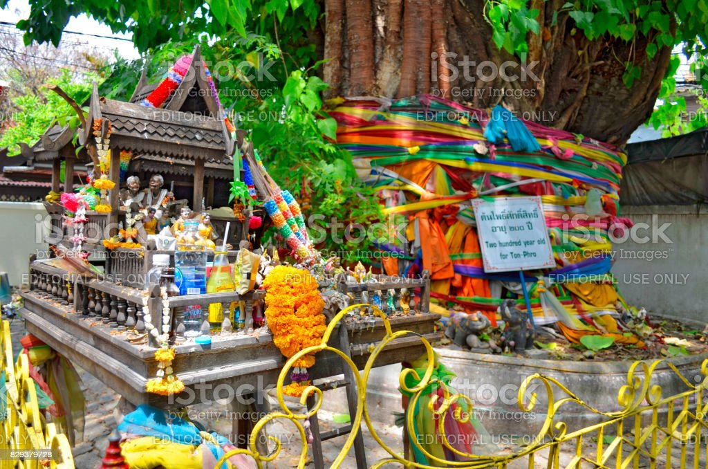 Spirit house and holy tree in Bangkok stock photo