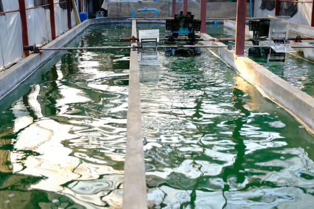 Spirulina-Bauernhof. Algen, die Landwirtschaft für die Herstellung von Nahrungsergänzungsmittel – Foto