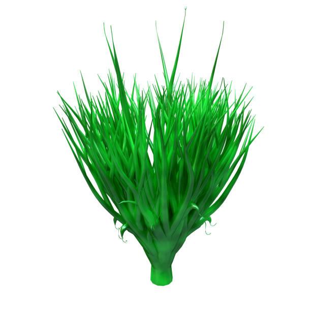 spirulina växt, undervattens alger, rik på protein och kraftfull antioxidant. tång isolerad på vit bakgrund. 3d-rendering - spirulinabakterie bildbanksfoton och bilder