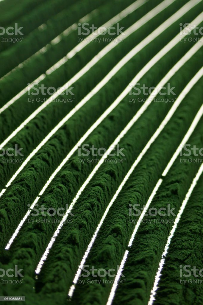 Spirulina powder.Algae spirulina. green spirulina powder background.Spirulina powder close-up.Super food . - Royalty-free Abstract Stock Photo