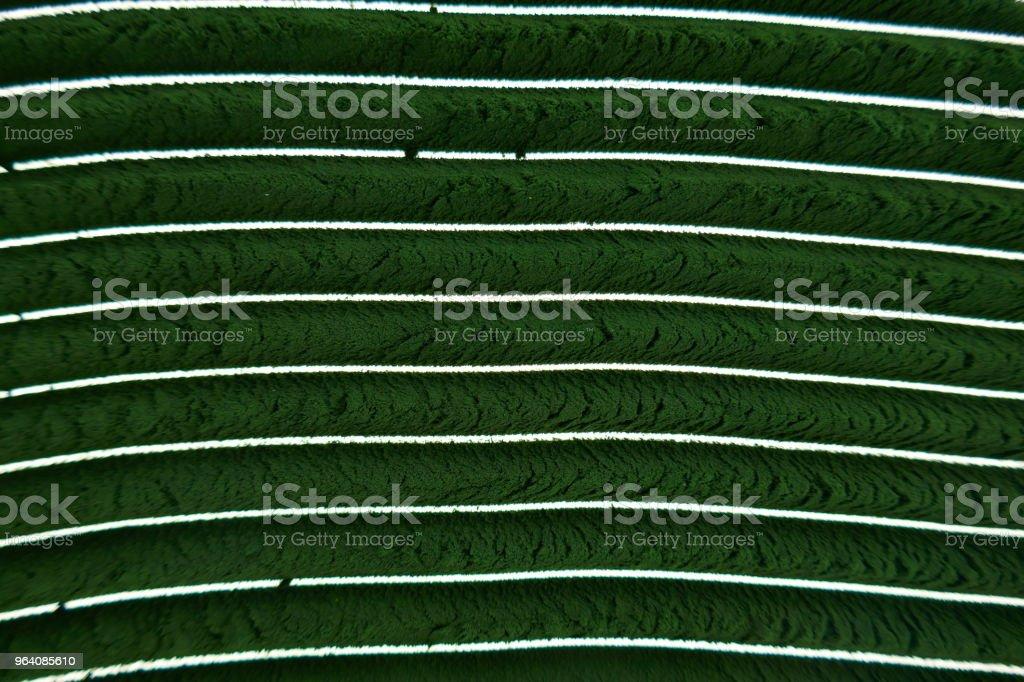 スピルリナ パウダーです。藻 spirulina.dry 緑スピルリナ パウダー背景。スピルリナ パウダーのクローズ アップ。スーパーの食品。 - オーガニックのロイヤリティフリーストックフォト
