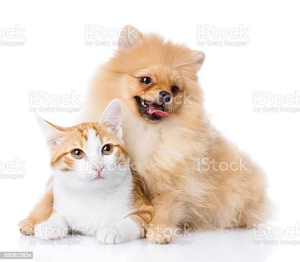Spitz dog embraces a cat picture id530922634?b=1&k=6&m=530922634&s=612x612&h=zs2zoyoqi81z7kgtfiwielsdofhe4vnf3jte5tl3tec=