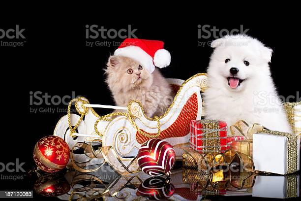Spitz puppy and kiten picture id187120083?b=1&k=6&m=187120083&s=612x612&h= 4w7ahzx8p3odqlpyzas9pt2xr8kfd9zysmgu ma04e=