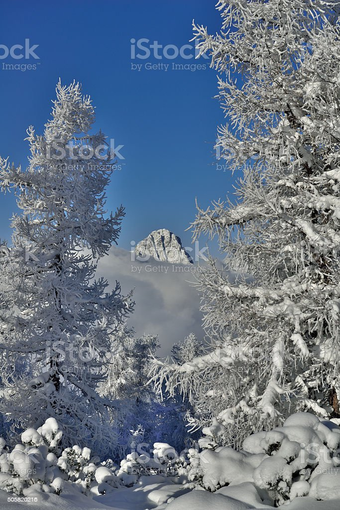Spitzmauer behind snow covered trees stock photo