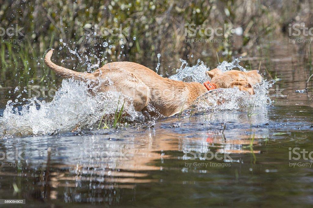 Splash Down stock photo