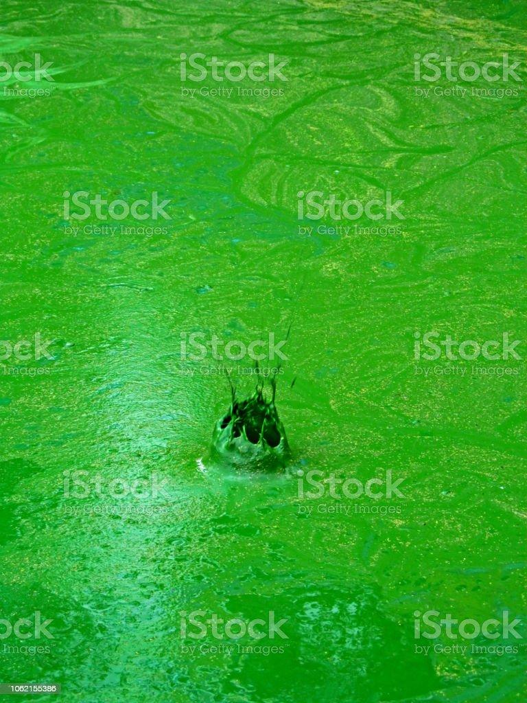 Splash of green liquid, water pollution by blooming blue-green algae (cyanobacteria) is world environmental problem. stock photo
