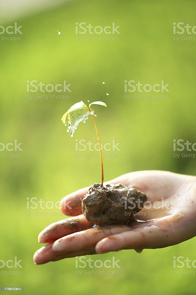 Splash of Water Hitting Small Plant on Palm royalty-free stock photo