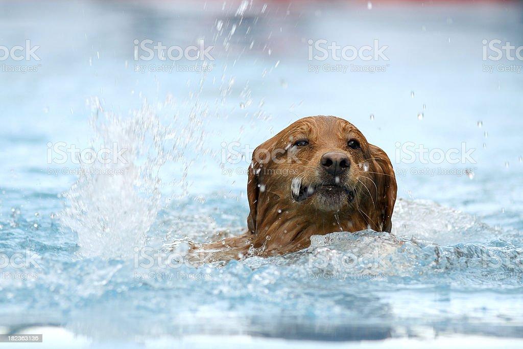 Splashing Fun Series royalty-free stock photo