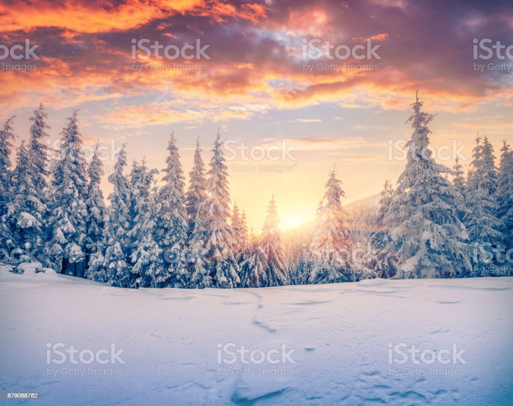 Splendid Christmas scene in the mountain forest. Splendid Christmas scene in the mountain forest. Colorful winter sunrise in the Carpathians, Ukraine, Europe. Artistic style post processed photo. Adventure Stock Photo