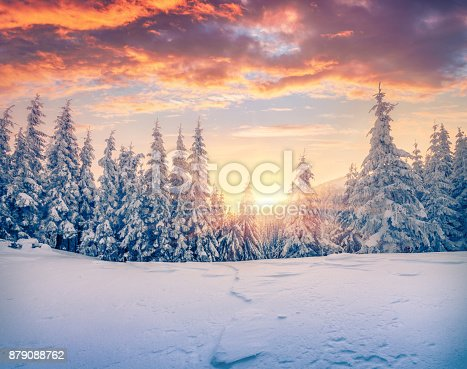 istock Splendid Christmas scene in the mountain forest. 879088762