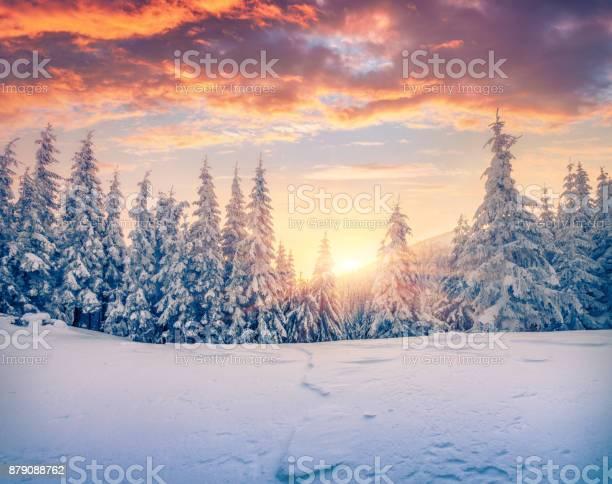 Photo of Splendid Christmas scene in the mountain forest.
