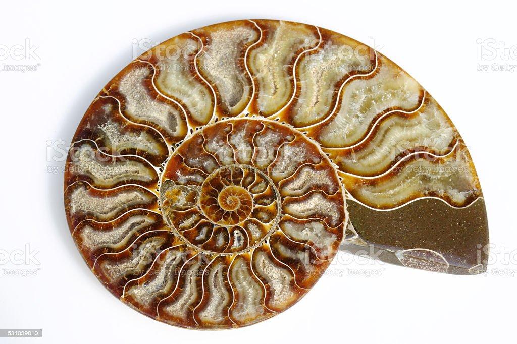 Split Ammonit mit Wachstum Spiralmuster – Foto