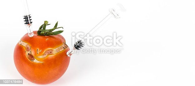 Split, cracked tomatoe due to rain after drought, Gardening problem. With syringe. Concept non organic food, genetically modified organism. On white background. Place to write