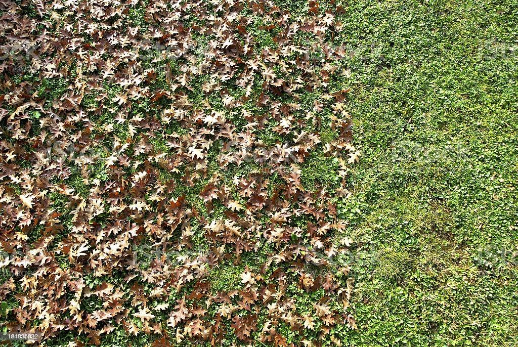 Split garden stock photo