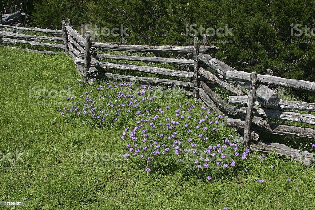 Split rail fence with flowers stock photo