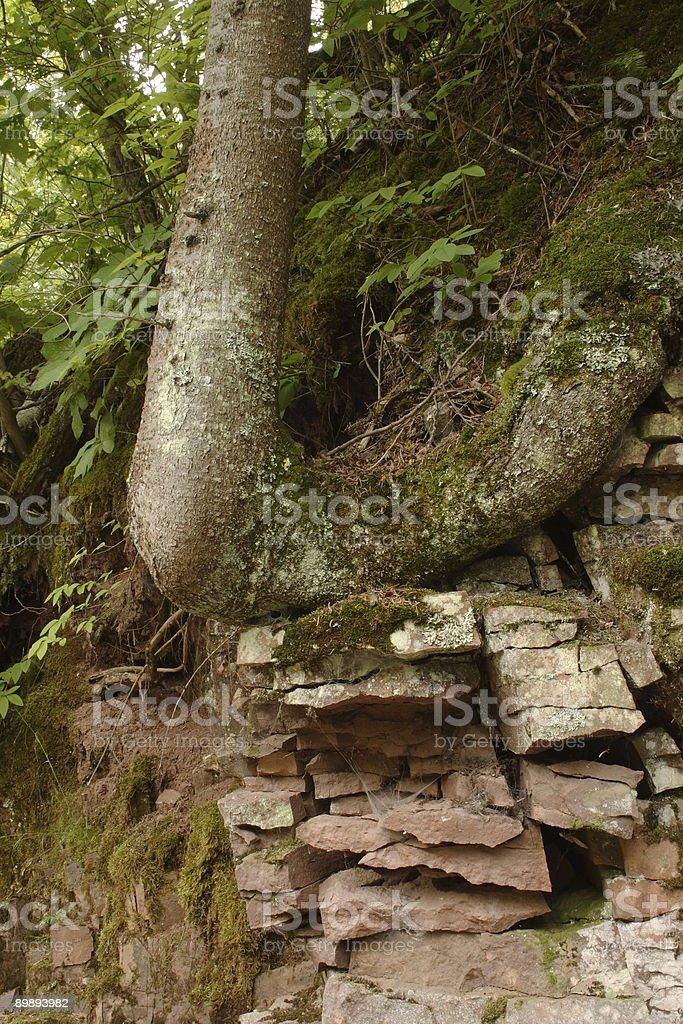 Split Rock Forest royalty-free stock photo