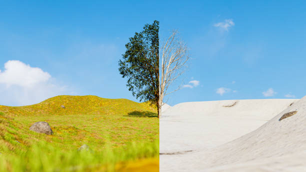 Split screen of a tree in summer and winter showing the season change stock photo
