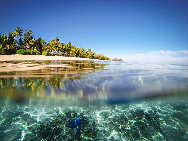 split shot of tropical island - fiji stock photos and pictures