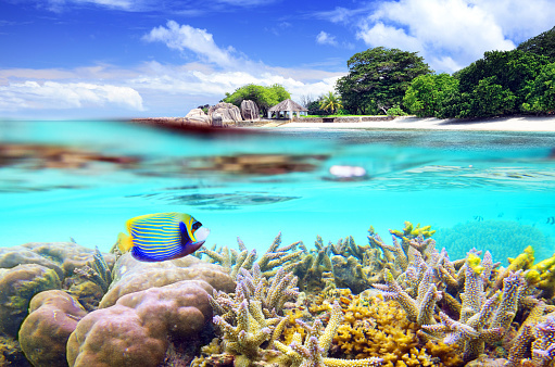 Over and underwater shot of tropical island