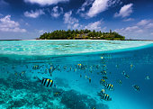 Split view to a tropical island with colorful fish in the turquoise sea, coconut palm trees and deep blue sky in the Maldives islands