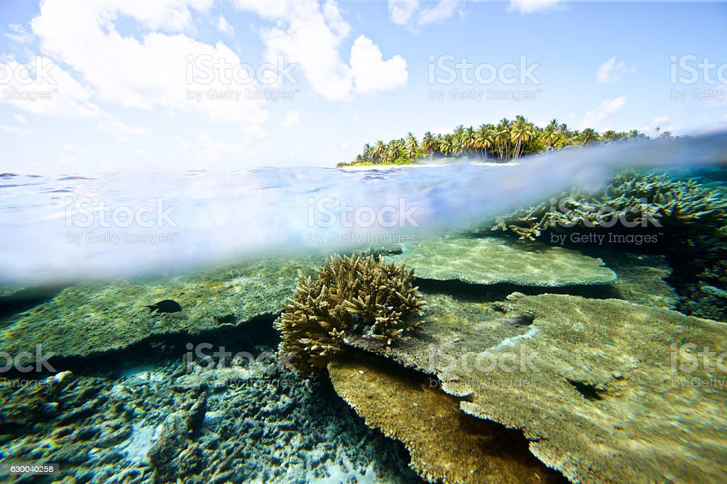 Split view of underwater coral with island in background stock photo