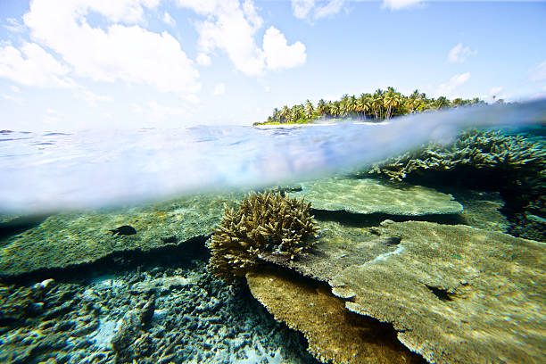 Split view of underwater coral with island in background - foto stock