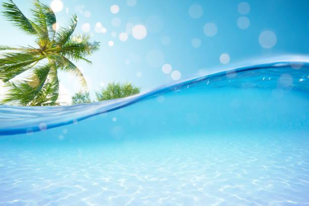 de gesplitste weergave onder zee hemel en hemel met palmbomen. - ocean under water stockfoto's en -beelden