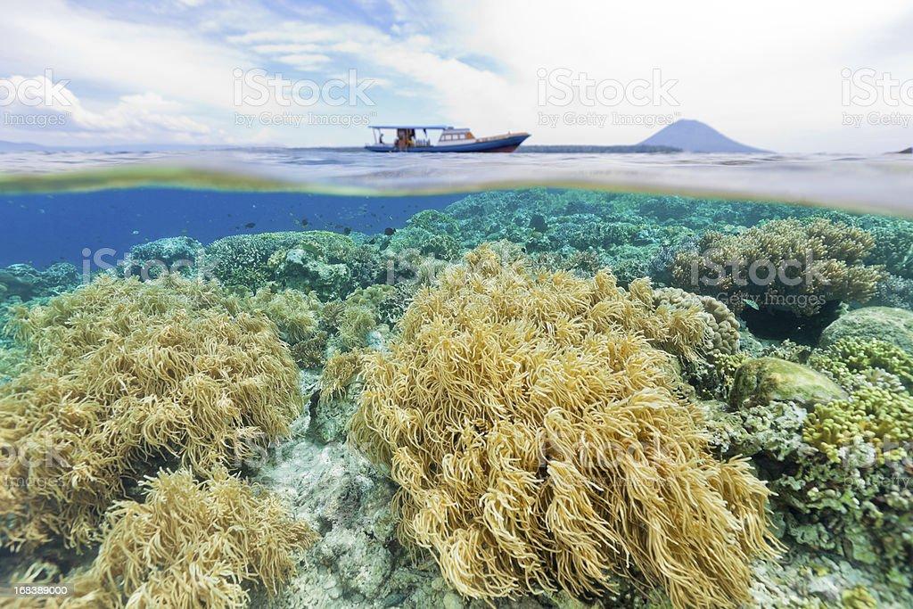 Splitshot, Diving the National Park, Siladen, Bunaken, Manado Tua, Indonesia stock photo