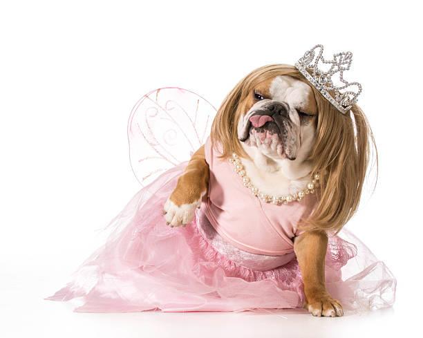 eine riesige hund - prinzessin tiara stock-fotos und bilder