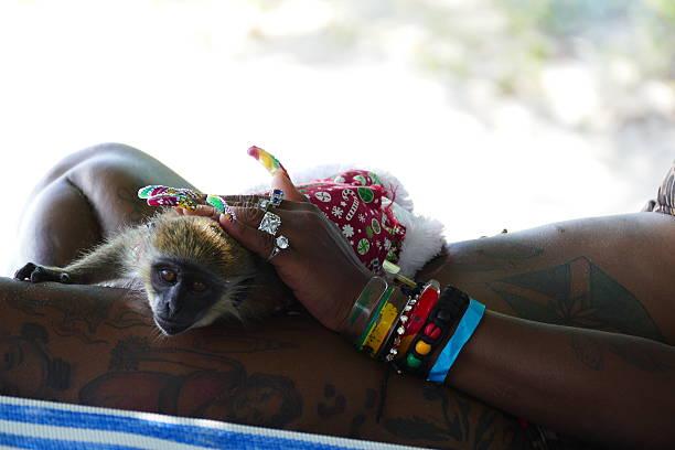 spoiled monkey - affentattoos stock-fotos und bilder