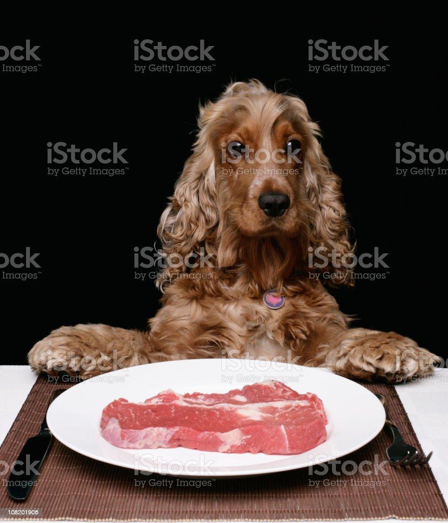 Spoilt Dog royalty-free stock photo