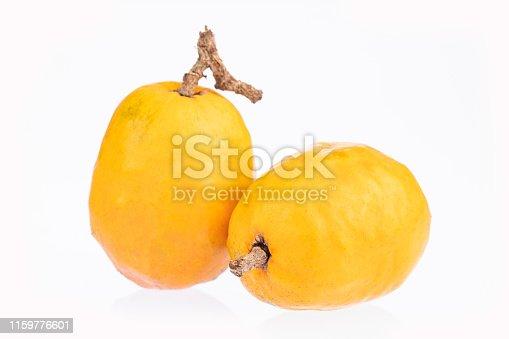 Spondias purpurea - Delicious tropical fruit