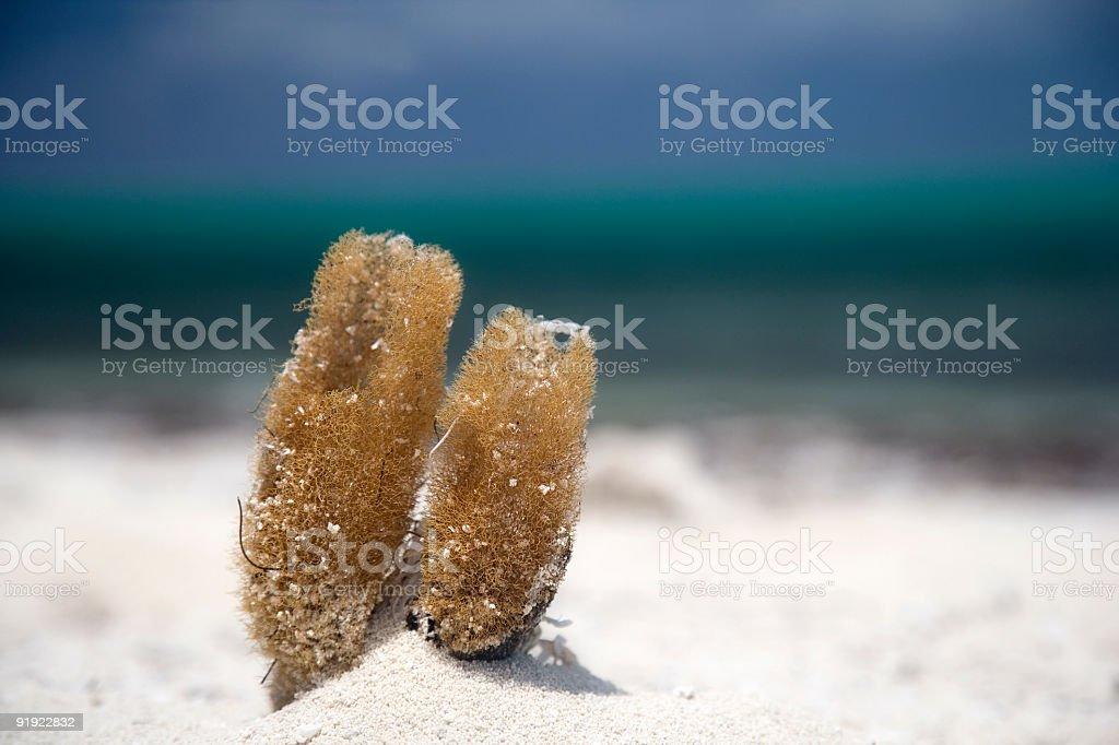 Sponge at the beach facing blue ocean stock photo