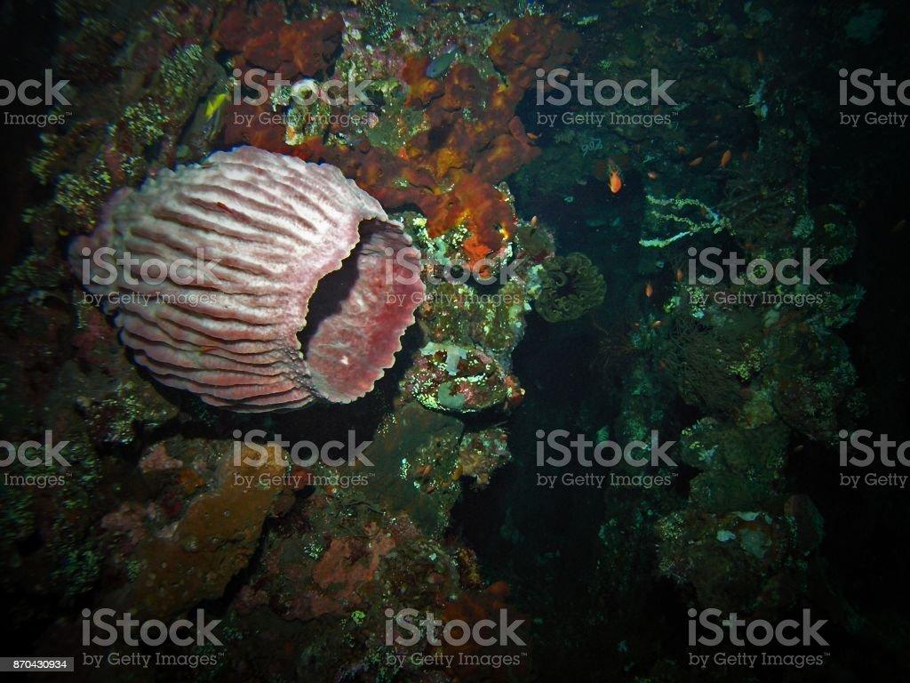 Sponge inside USS Liberty shipwreck stock photo