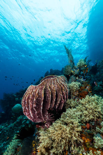 sponge on the slope of a coral reef with visible water surface and fish stock photo
