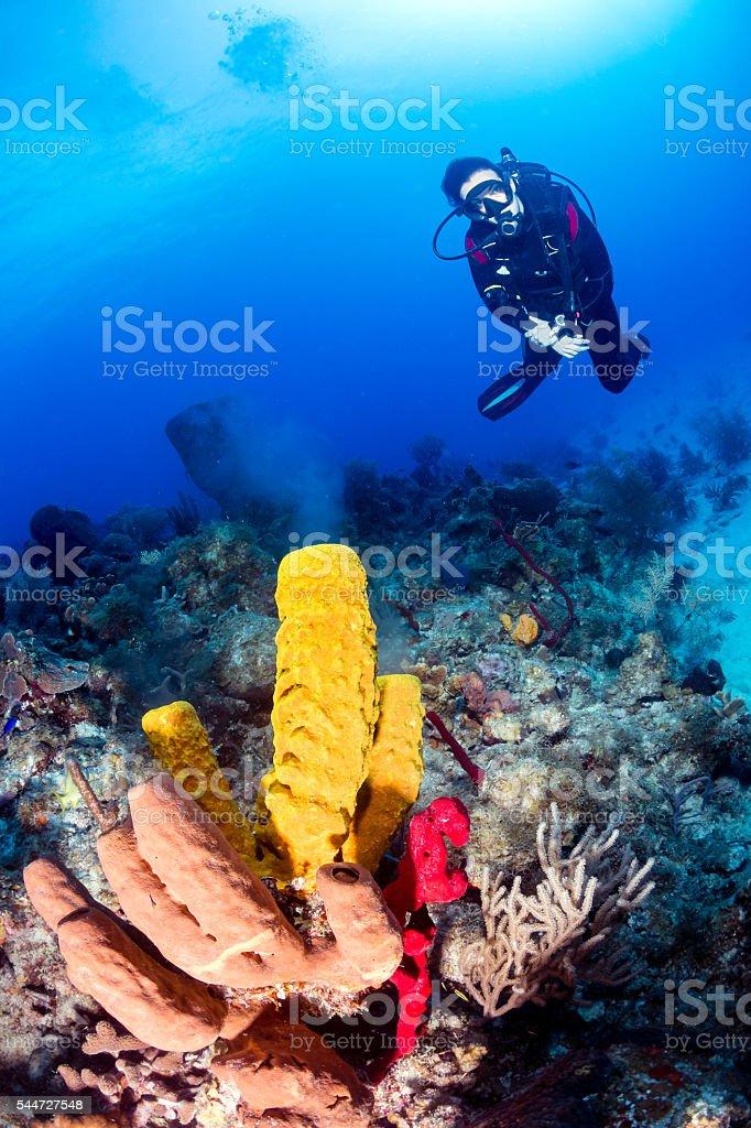 Sponges spawning stock photo