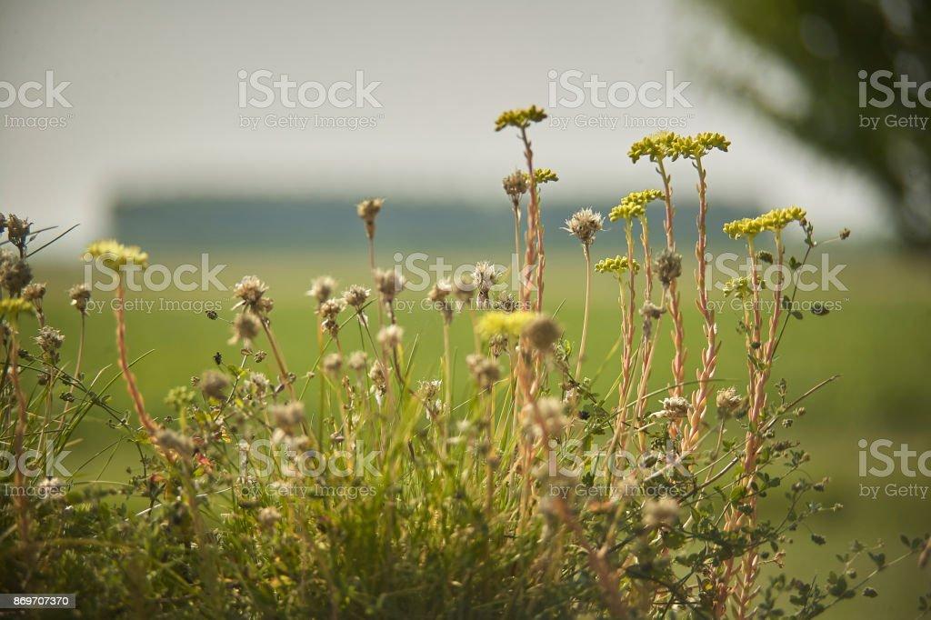 Spontaneous flowers stock photo